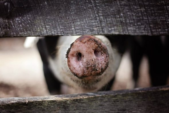 Environmental impact of meat production