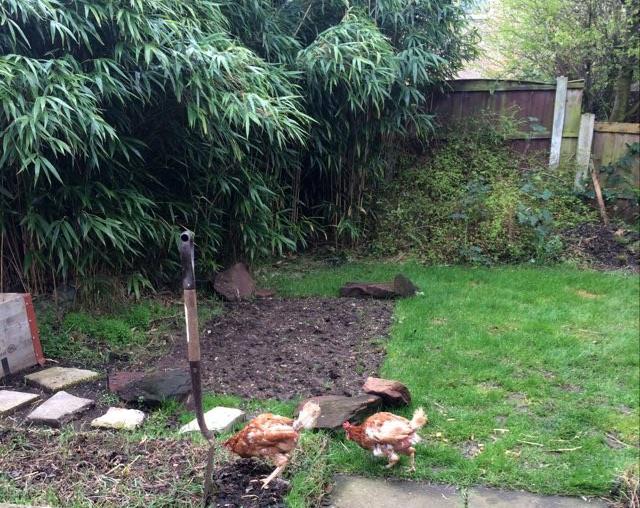 #10 Low cost edible garden hacks to save money