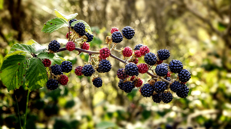 10 Edible backyard plants you can forage in Britain – A helpful illustrated guide